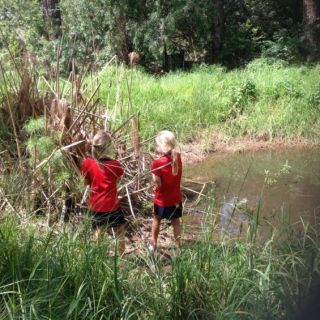 exploring our wetland