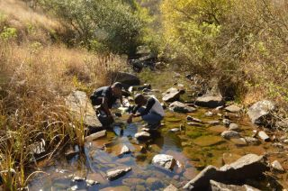 Using miniSASS to see how clean a stream to the Umgeni River is